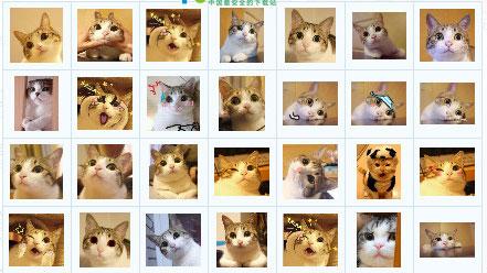 瓜皮猫表情包截图