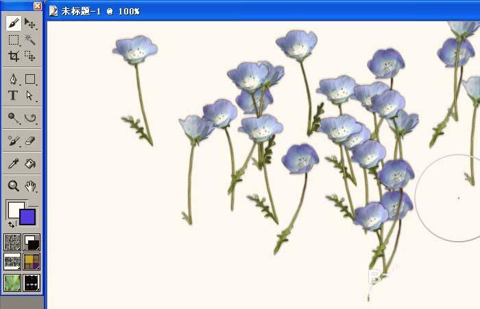 花朵五年级画画一等奖
