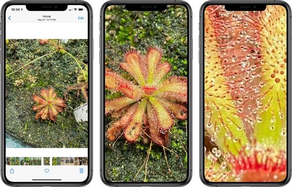 必須升!iOS 14照片放大倍數明顯增加