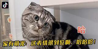 抖音官网已正式上线 网页版入口分享截图